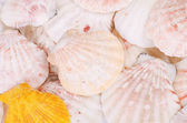 Sea shells background — Stockfoto
