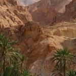 Famous Mountain oasis Chebika — Stock Photo #50803155