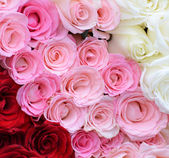 Pink, white, red roses — Foto de Stock