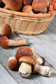 Raw boletus edulis  mushrooms — Stock Photo