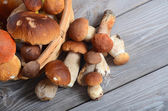 Raw boletus mushrooms — Stock Photo
