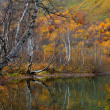 Colorful golden trees on a shore of a mountain lake in Autumn — Stok fotoğraf
