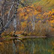 Colorful golden trees on a shore of a mountain lake in Autumn - Stock Photo