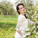 Apple blossom — Stock Photo #25580007