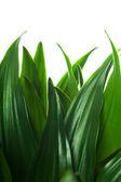 листва — Стоковое фото