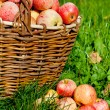 Apples in a basket — Stock Photo #13358446