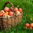 Apples in a basket — Stock Photo #13358448