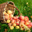 Apples in a basket — Stock Photo #13358450