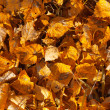 Autumn leaves — Stock Photo #13358456