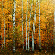 Autumn forest — Stock Photo #13358458