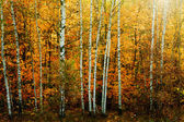 Herfst bos — Stockfoto