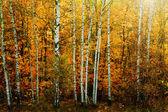 Podzimní les — Stock fotografie