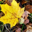 Autumn leaf — Stock Photo #13860541