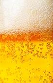 Fond de bière — Photo