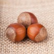 Hazelnuts — Stock Photo #22081197