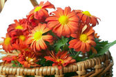 Chrysanthemum in a basket — Stock Photo