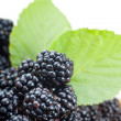 Blackberries — Foto de Stock