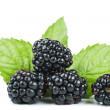 Foto Stock: Blackberries