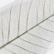 Dry leaf detail texture — Stock Photo
