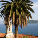Tree , roof tiles, belfry. Adriatic — Stock Photo #1704798