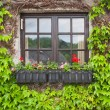 Vintage window with flowers — Stock Photo