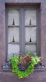 Traditional window with green plants. Belgium — Stok fotoğraf