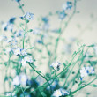 Stock Photo: Forget-me-nots