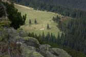 Forest in the Carpathian Mountains. — Foto de Stock