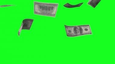Money rain — Stock Video