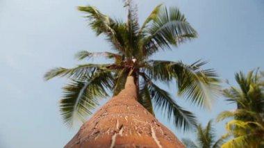 Palm tree on the beach — Stock Video