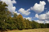 Early Autumn — Stock Photo