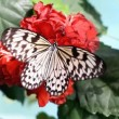 Butterfly on the red flower — Stock Video