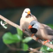 Finches sitting on a branch in the forest - Stok fotoğraf