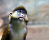 Squirrel monkey in a branch — Stock Photo