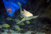 Shark swimming along underwater — Stock Photo