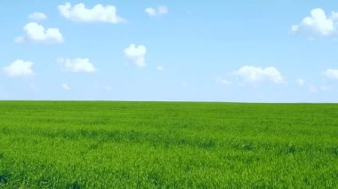 Green grass on blue sky background — Vídeo de stock