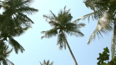 Coconut palm trees and sky — Stock Video