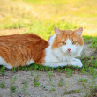 Young cat lying in the grass — Stockfoto