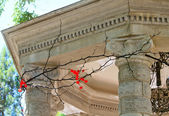 Fragment of the rotunda with columns strung with acacia thorns — Stock Photo