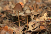 Magic Mushroom in the forest — Stock Photo