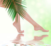 Woman legs and green palm — Stock Photo