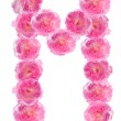 Letter M of the alphabet made of pink roses. Isolated. — Stock Photo #24452217