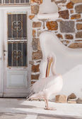 La petros pélican célèbre de l'île de mykonos, près de la porte du restaurant — Photo