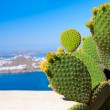 Beautiful green cactus on a background of blue sea on the island — Stock Photo #45338375
