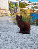 Greek cat - black cat sitting on a  sidewalk next to a flower an — Stock Photo