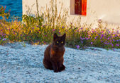 Greek cat - black cat sitting on a  sidewalk — Stock Photo