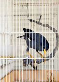 Bird 3. — Foto de Stock