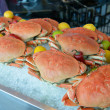 Stock Photo: Dungeness crab