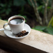 Kopi Luwak — Stock Photo