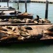 Sea lions at Pier 39 — Stock Photo #33223933